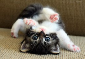 cute-baby-animals-2-2